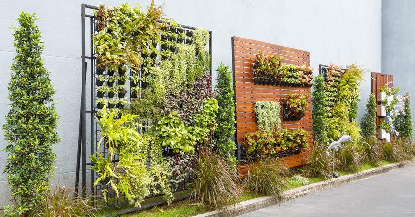 lindo jardim vertical composto por diversas plantas